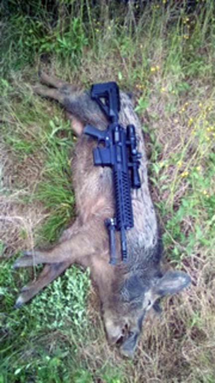 Succesful Hog Hunt