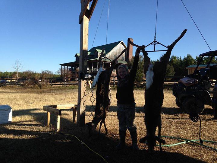 Catch Deer  hanging