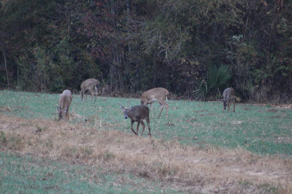 deer-hunting-2180