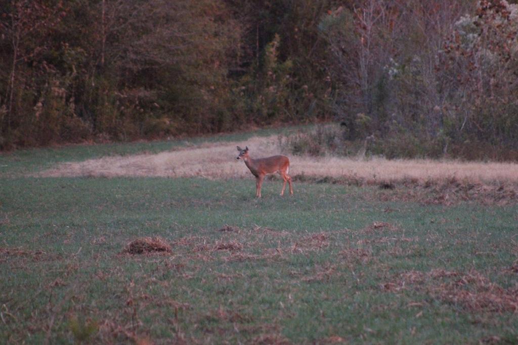 deer-hunting-2361