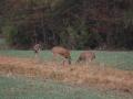 deer-hunting-2190