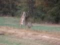 deer-hunting-2195