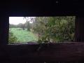 view-deerstand-abbevillega