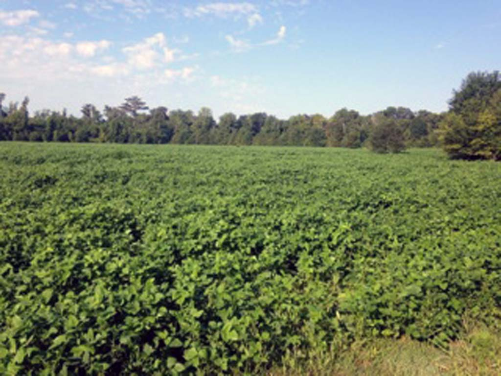 Major feeding acreage