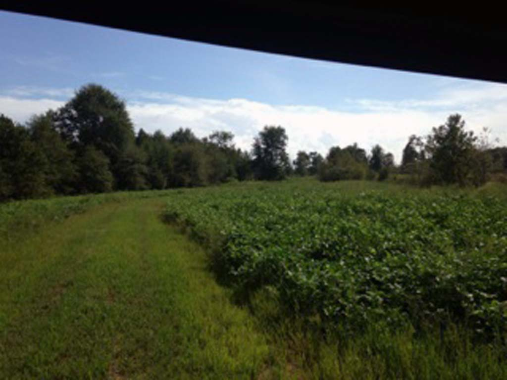 Hunting - Food Plot