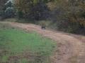 ga_hogs-coyote-2250