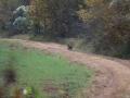 ga_hogs-coyote-2255