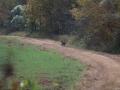ga_hogs-coyote-2256