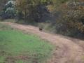 ga_hogs-coyote-2258