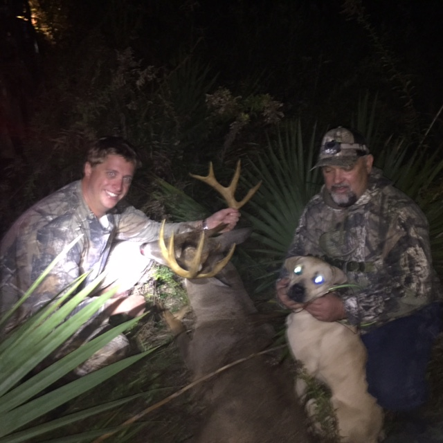 Buck In Woods