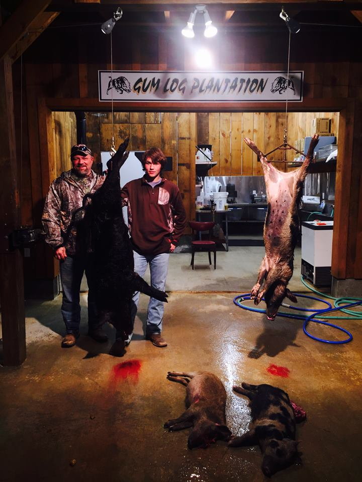 Hanging Hogs