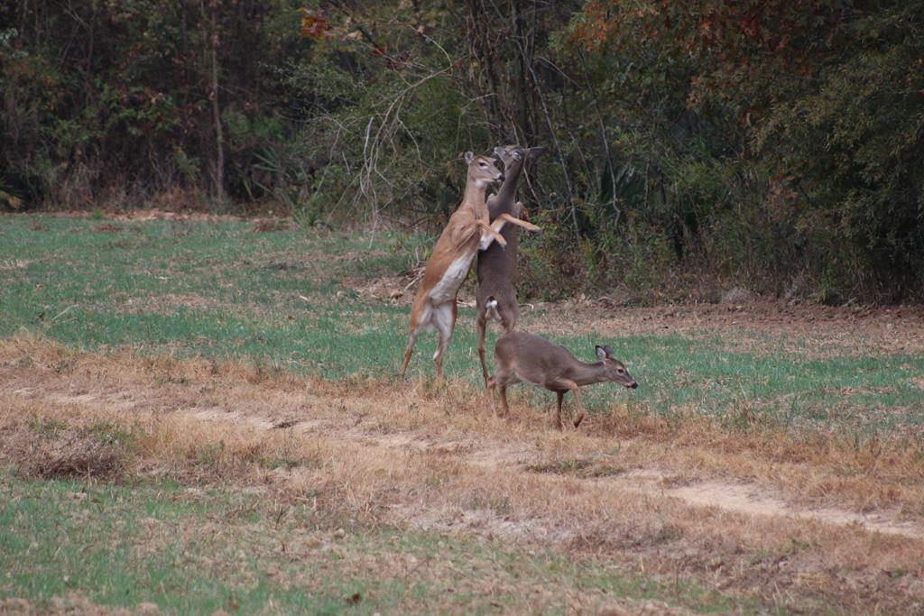 Deer-hunting-2196