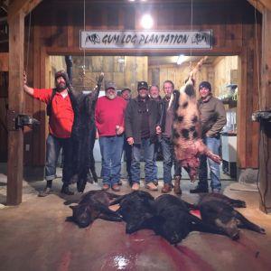 Group Hogs