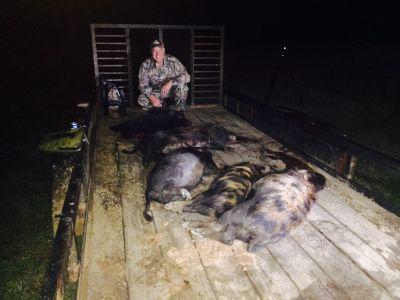 Hog On Trailer