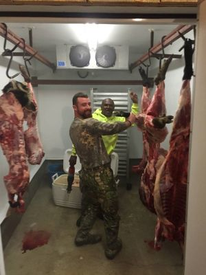 Hogs In Cooler