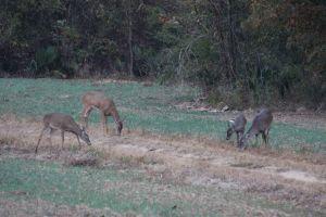 Deer-hunting-2194
