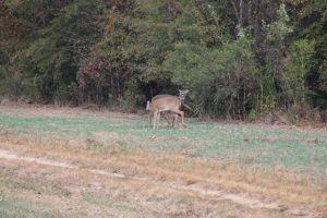 Deer-hunting-2197